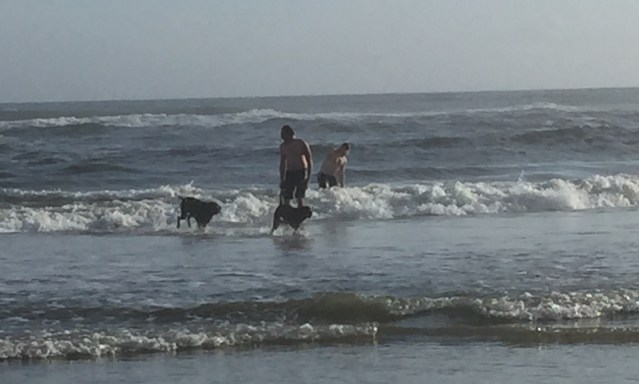 Ocracoke beachgoers on Christmas day take a quick plunge. Photo by C. Leinbach