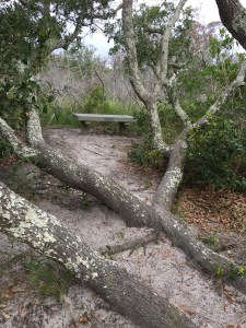 Springers Point benches, Ocracoke NC