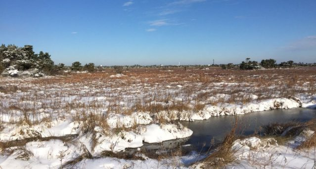 The wintry marsh along Southpoint Road, Ocracoke, NC. Photo: C. Leinbach