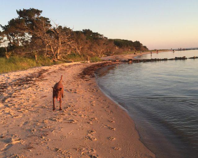 Springer's Point beach, Ocracoke, NC. Photo: C. Leinbach