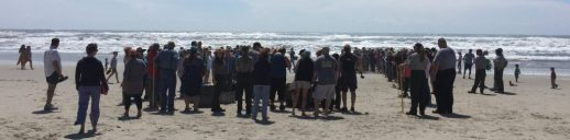 Dozens of spectators watch 12 rehabilitated turtles released back into the ocean April 25 on Ocracoke, N.C. Photo: C. Leinbach