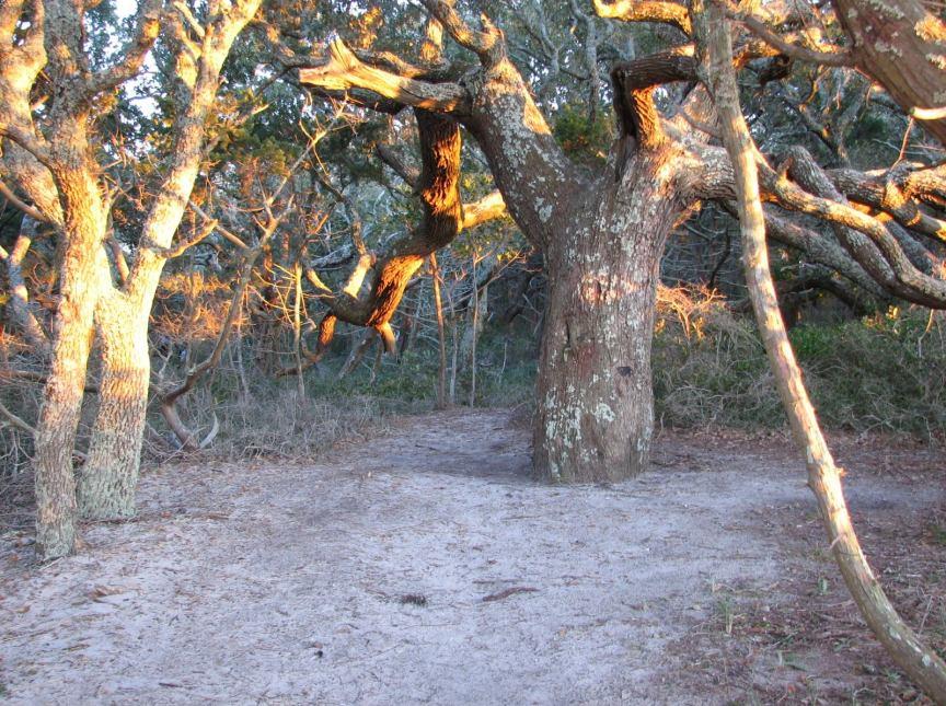Springer's Point, Ocracoke NC. Photo: Peter Vankevic