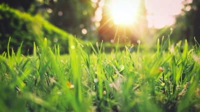 Green grass field sunset scenery by Aniket Bhattacharya
