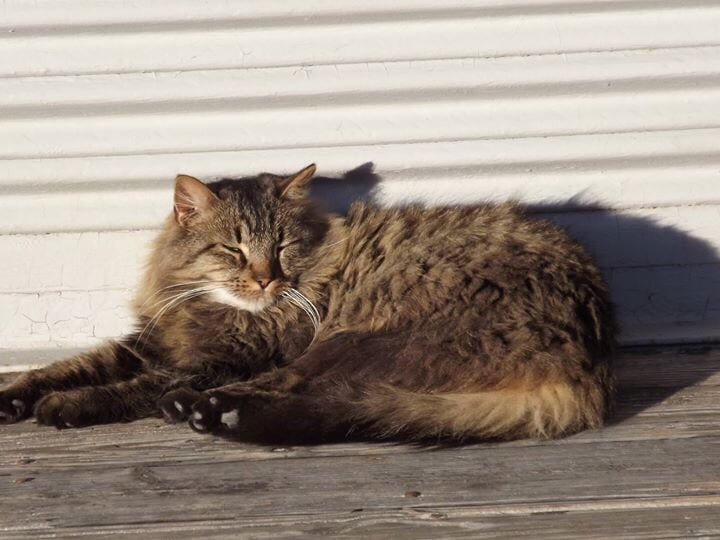 Howell: Crazy Cat Hoarding!