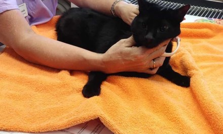 STAFFORD: Cat Reunited With Family After Being Rescued From Tree