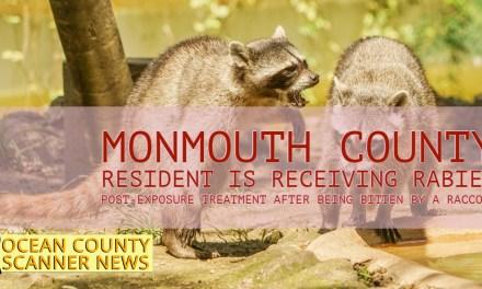 MONMOUTH COUNTY: Belmar Resident Bitten By Raccoon In Own Yard!