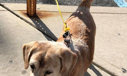 Seaside Heights: Dog Locked In Vehicle