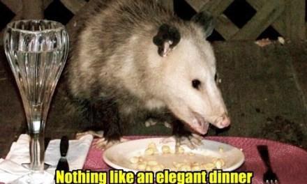 ISLAND HEIGHTS: DOA Opossum