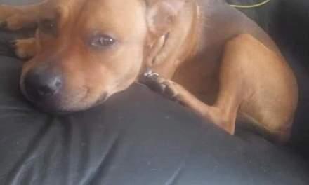 Beachwood: Lost Dog