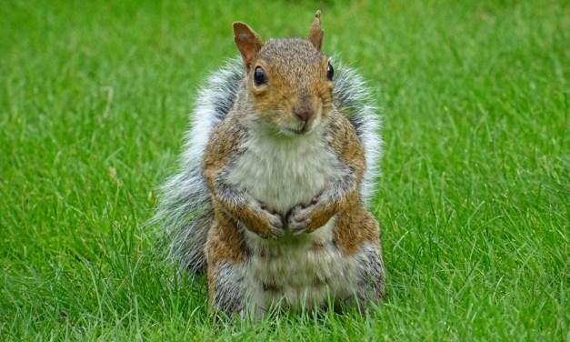 PINE BEACH: Injured Squirrel