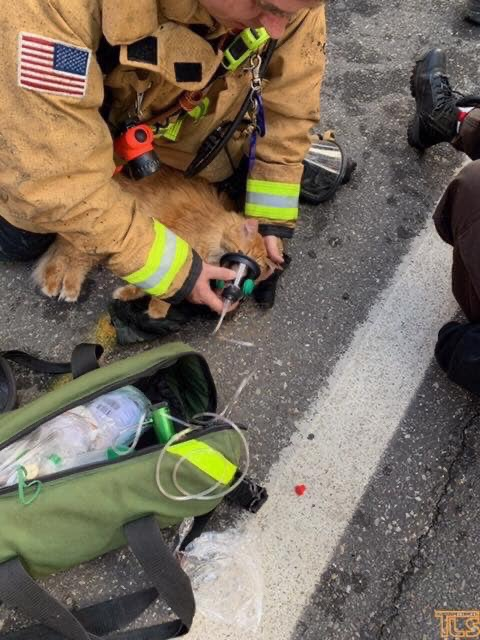 MANCHESTER: Cat Survives House Fire
