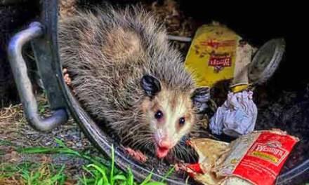 OCEAN GATE: Opossum Troubles