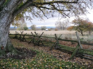 wood cross buck fence under trees with covered wagon in background