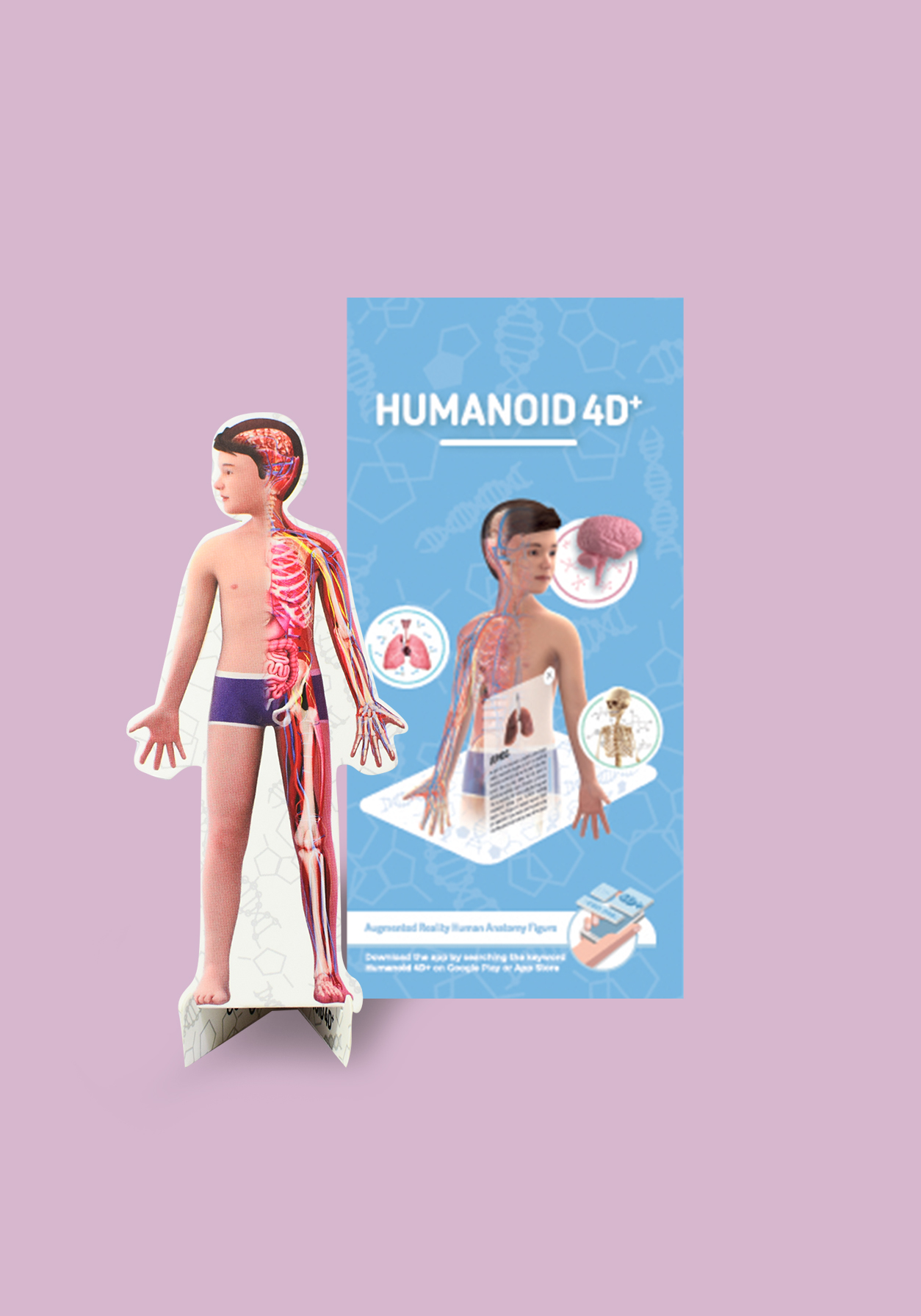 Human Body for Kids – How to Provide a Proper Introduction of Human Body for Kids | By Octagon Studio