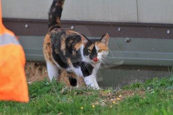 © Octane Photographic 2010. British F3 – Thruxton . 7th August 2010. Thruxton cat. Digital Ref : CB7D7196