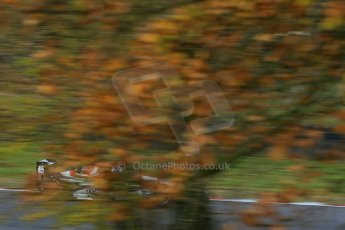 World © Octane Photographic Ltd. Brands Hatch, Qualifying, Sunday 24th November 2013. BRDC Formula 4 Winter Series, MSV F4-13, Will Palmer – HHC Motorsport. Digital Ref : 0866lw1d7275