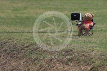 World © Octane Photographic Ltd. Mr Bear watches the F1. Friday 22nd July 2016, F1 Hungarian GP Practice 2, Hungaroring, Hungary. Digital Ref : 1641LB1D1435
