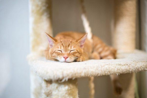 Self Love Cat, Self Love, Tips for Self Love, Sensitives, Empaths, Empathic, Octavia Brooks