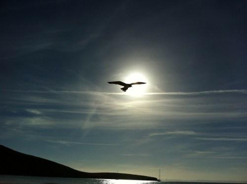 Flow State, Attunement, Bird Flying, Divine human nature, divinity, divine source, octavia brooks, shamanic healing