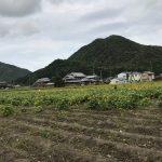 丹波篠山黒豆の枝豆収穫体験からちょこっとマーケティングを考えてみる