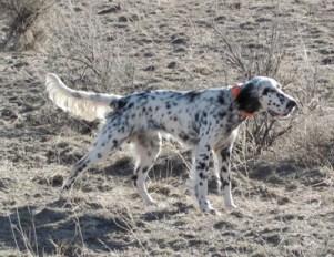October Camas Prairie