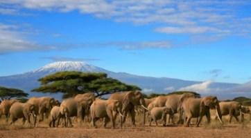 東非肯亞曠野豪情之旅九天