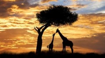 肯亞,坦尚尼亞動物巡奇13天之旅