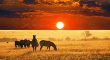 南非好望角,約翰內斯堡10天遊