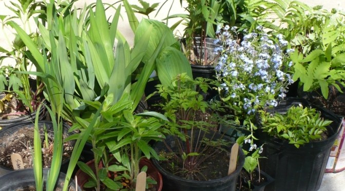 Master Gardeners to get Bloomin' Crazy with plant sale