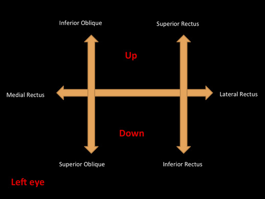 diagram of the left eye bosch 24 volt alternator wiring clinical examination ocular manifestations systemic disease 1039735 jpg 519