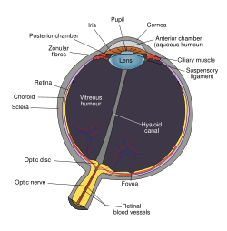 Ocular Nutrition And Eye Health Nutrition Helps To Maintain Vision