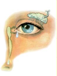 oculoplastica