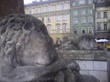 Lwy przed wieżą krakowskiego ratusza
