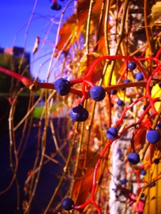 Owoce Jesieni