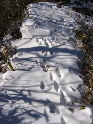 動物の足跡はあるが、人間の通った形跡無し