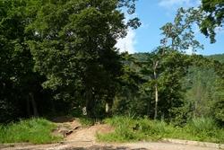 しばらく林道を進むと再び登山道