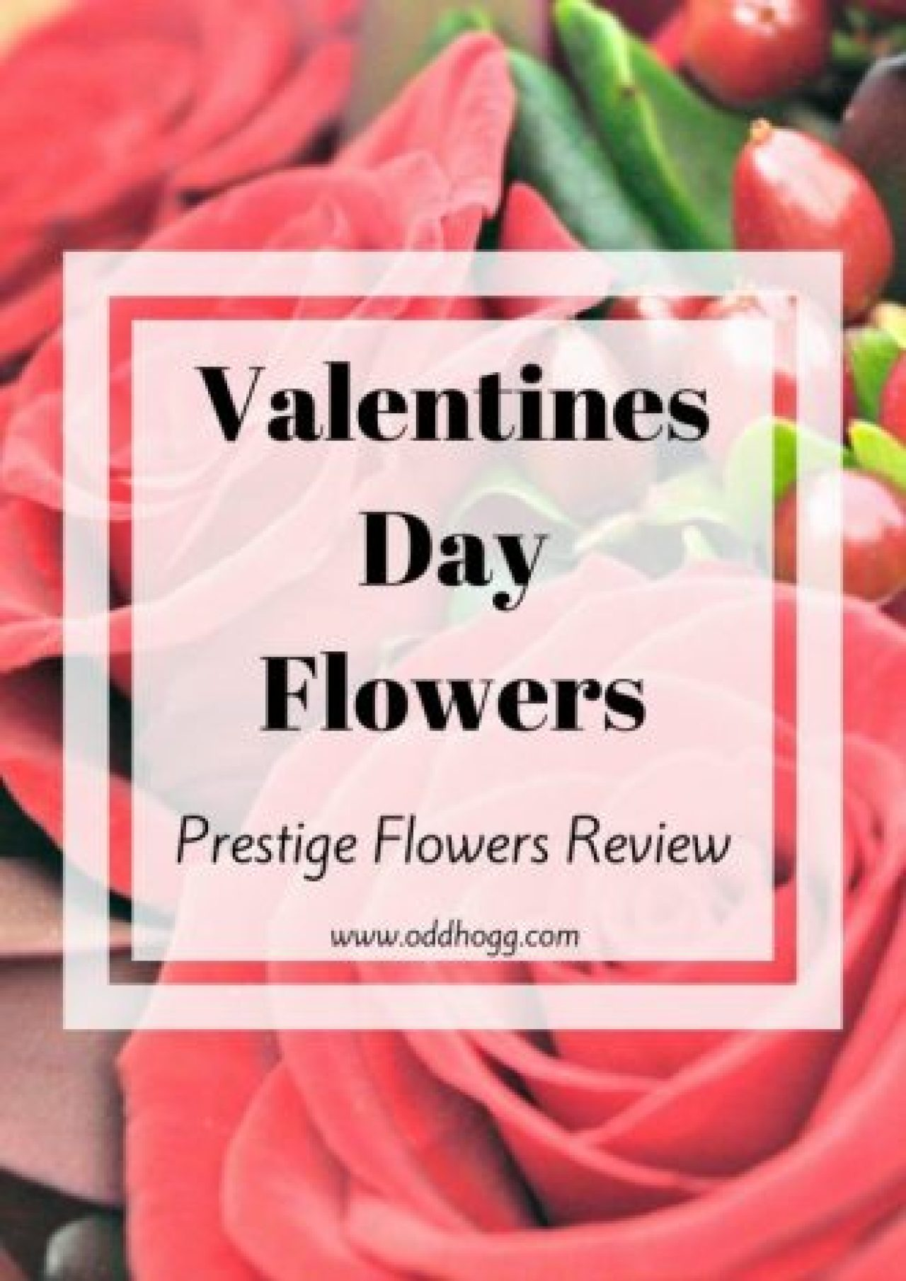 Prestige Flowers Review | Are you looking for the perfect online florist to order some flowers? For Valentines Day? A Celebration? Get well soon flowers? Condolences? Prestige have a full range to suit all your needs, and sent us a bouquet of their roses to see what we thought http://oddhogg.com