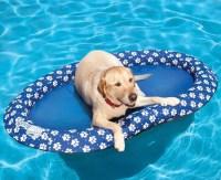Dog Pool Float