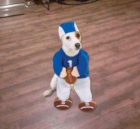 Football Pet Costumes Images