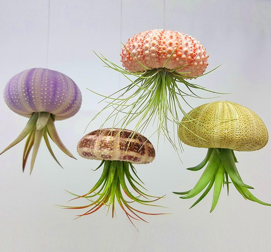Jellyfish Air Plant Holders 4Pack