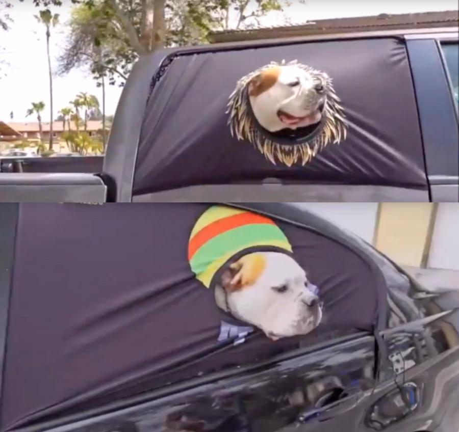 ebay kitchen cleaning wood cabinets peekapet: a safe way for your dog to hang out the car window