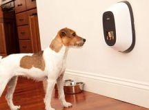 PetChatz Pet Camera and Treat Dispenser