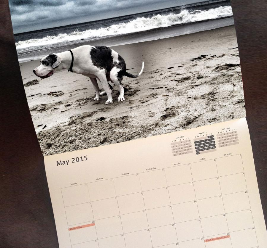 kitchen miniature low flow faucet pooping dogs calendar 2015