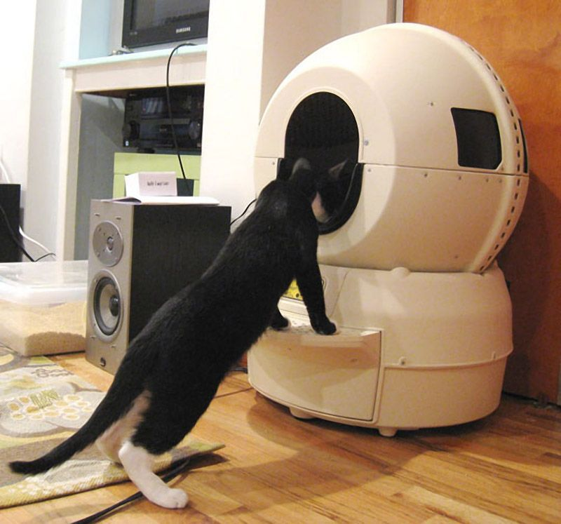 Self Cleaning Kitty Litter Robot