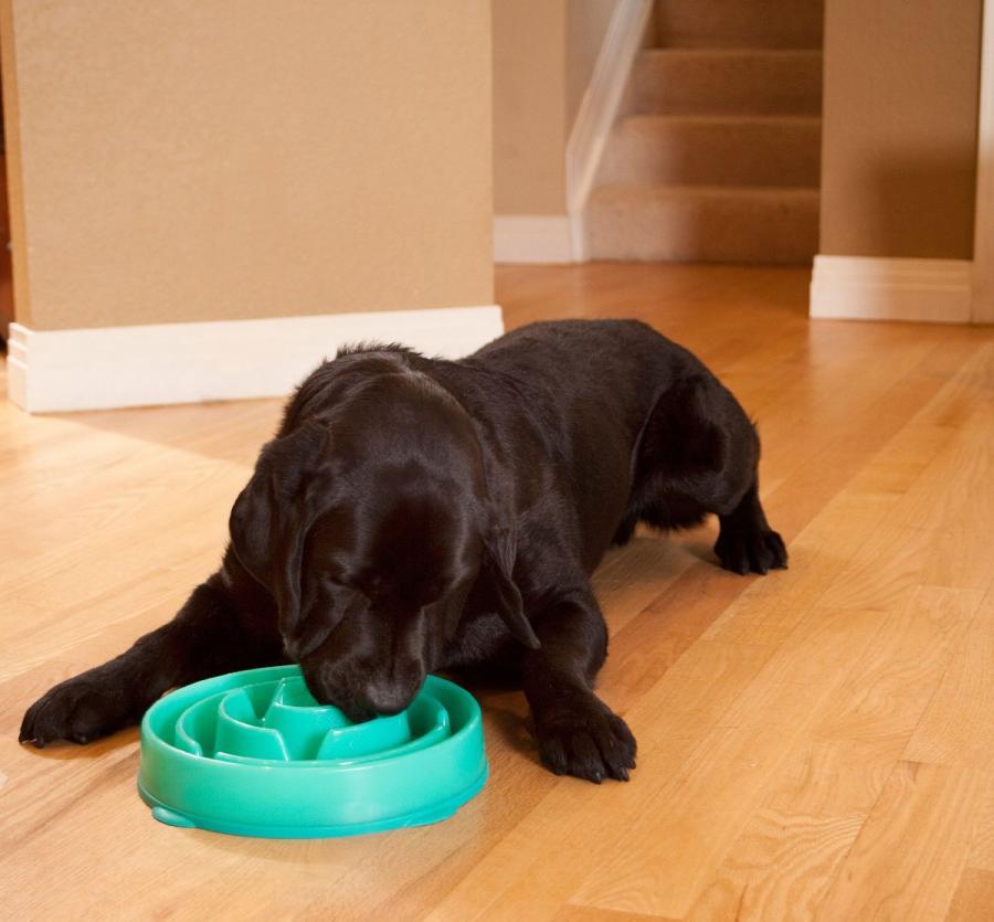 SloBowl Dog Bowl For Slow Feeding