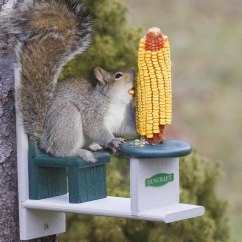 Squirrel Chair Feeder Cover Rental Philadelphia Table And Lets Your Squirrels Eat With Class