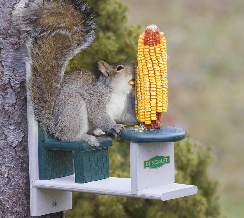 squirrel feeder chair funky fabric dining chairs table and lets your squirrels eat with class