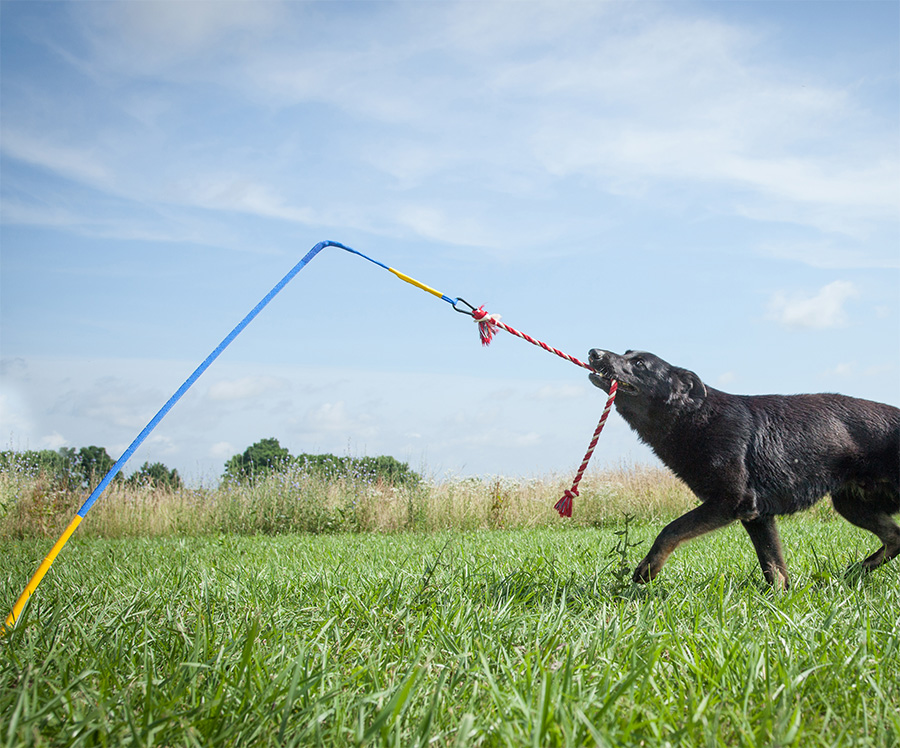 amazon kitchen sinks vans tether tug: a self tugging dog toy that sticks into the ground