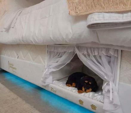 This Mattress Has a Dog Bed Built Into The Side Of It