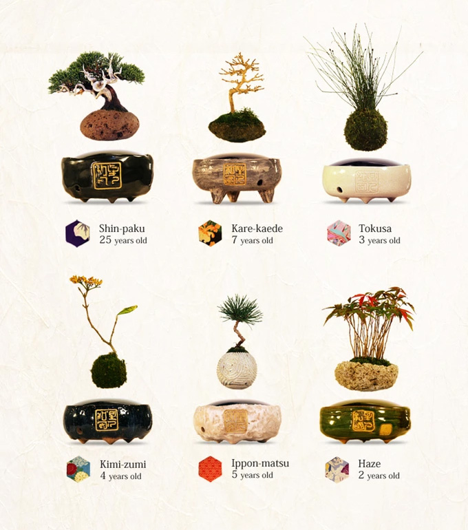 Air Bonsai Where Buy